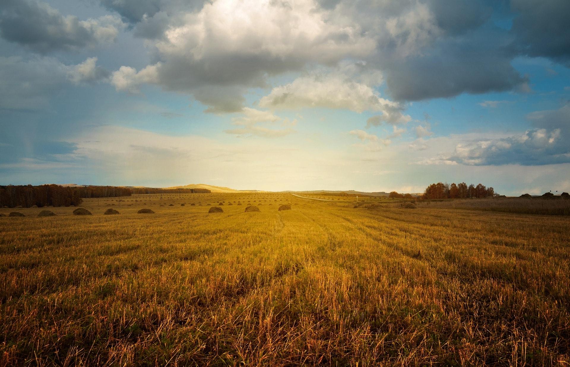 Kako podariti kmetijsko zemljišče, gozd, kmetijo?