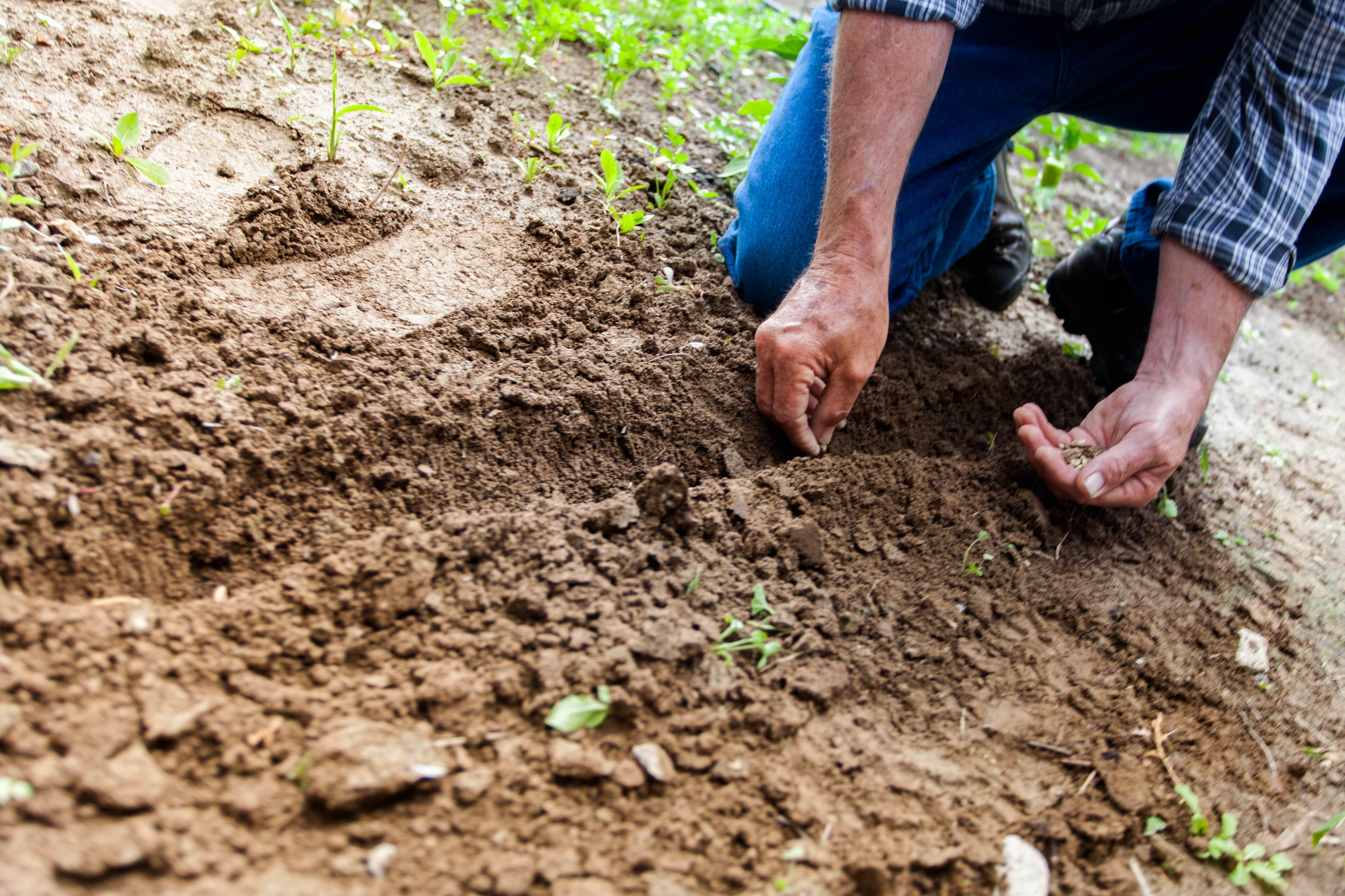 Opravljanje začasnega oz. občasnega dela na kmetiji